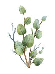 Watercolour green eucalyptus bouquet on white background.