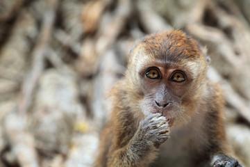 Little monkey portrait