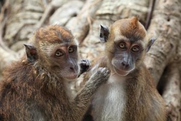 Cute monkey family