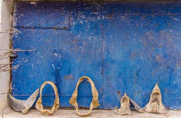 Many skeleton of a shark's on a blue background