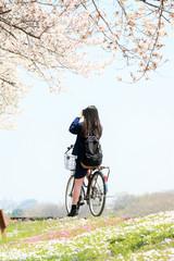 サイクリングロードの桜並木