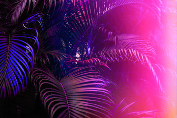 Deep dark purple palm leaves pattern with bright pink gradient effect, sun leak. Creative toned layout, horizontal