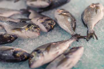 Fresh fish in the supermarket refrigerator in the Greece