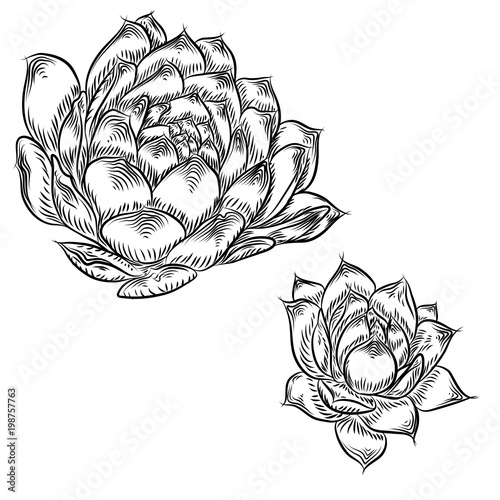 Cactus Flower Line Drawing : Quot tropical plant hand drawing cactus flower guzmania