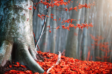 Foto op Aluminium Grijs Autumn nature scene. Fantasy fall landscape. Beautiful autumnal park with bright red leaves and old trees