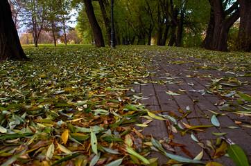 Осыпавшиеся листья