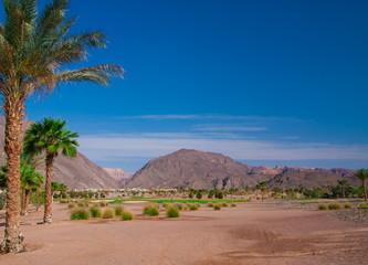 Egypt. Red sea day. Beach, palms