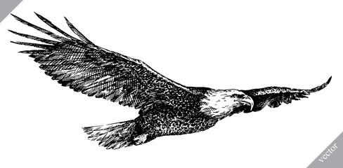 black and white engrave isolated eagle vector illustration