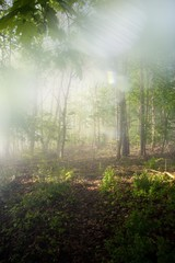 Great nature capture with lens effects, sun effects