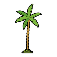 Palm tree isolated vector illustration graphic design