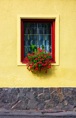 beautiful red flowers on the wall. lovely architecture element