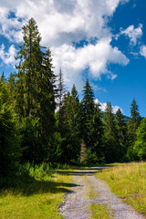 country road through spruce forest