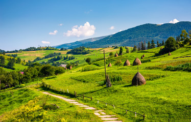 beautiful countryside in summertime