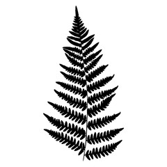 Fern, vector illustration. Black silhouette of a fern leaf on a white background.