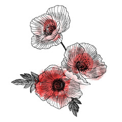 California poppy flowers drawn and sketch with line-art on white backgrounds. Watercolor design