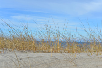 dry grass in the dunes and a sandy beach