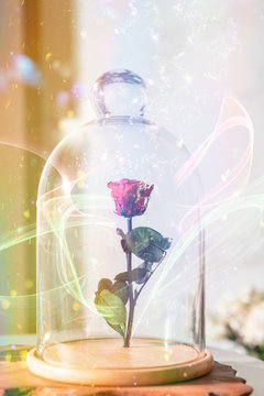 A enchanted rose in the glass covering.