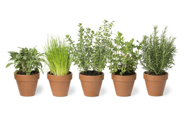 Row of brown terra cotta pots with fresh herbs
