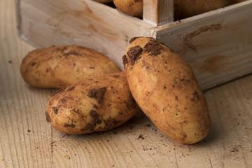 Fresh picked raw Diamant potatoes