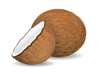 delicious juicy coconut on white background. Realistic style. Vector illustration.