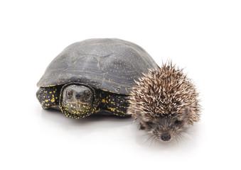 Big turtle and small hedgehog.
