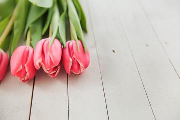 Spring Love Romance Tulip