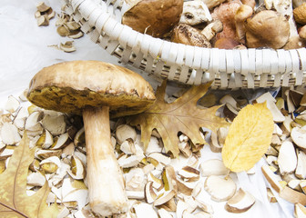 a large white mushroom lies in the leaves near the basket with mushrooms