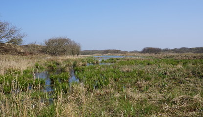 Nature reserve area called Het Zwanenwater near the village of Callantsoog in the Netherlands