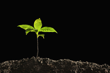 Green sprout growing out from soil isolated on black background