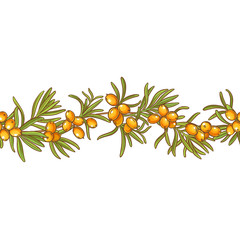 sea buckthorn vector pattern