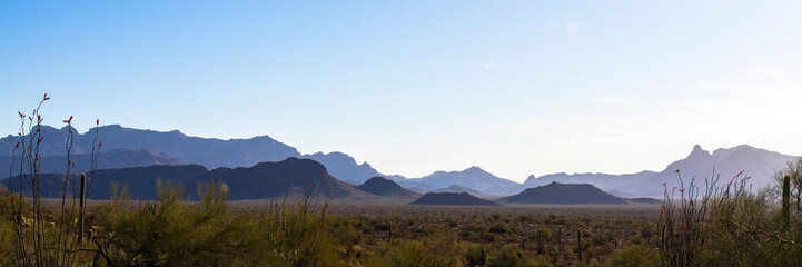 Panorama of Organ Pipe Cactus National Monument in southern Arizona at dawn, showing flowering Ocotillo, Giant Saguaro, Palo Verde, and the Ajo Mountains