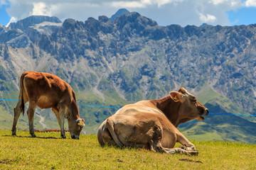 Seiser Alm, Alpe di Siusi die schönste Alm. Die größte Hochalmwiese in Europa, atemberaubende Gipfel mit großartigem Hintergrund. Südtirol in Italien, Dolomiten_005
