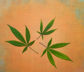 Medicinal uses for Marijuana are Far Reaching from Anxiety to Cancer Treatments