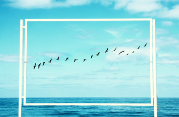 surreal enigmatic picture of flying birds and frame . beach landscape.