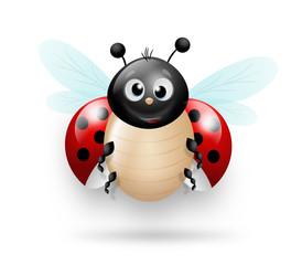Cute illustration of ladybug