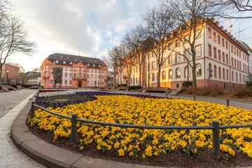 Blumenbeet am Schillerplatz in Mainz