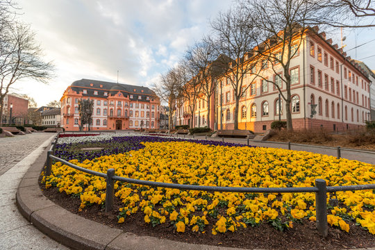 Blumenbeet am Schillerplatz in Mainz