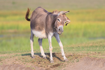 Cute donkey is defending itself from gadfly