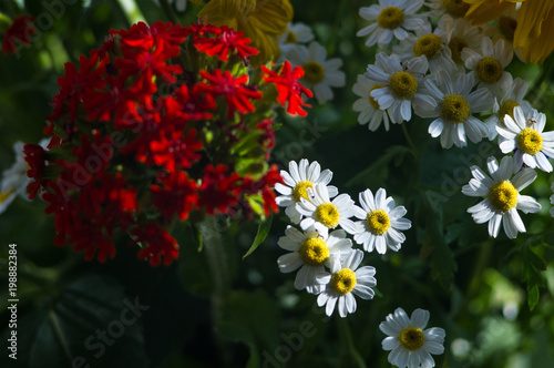 A bouquet of bright spring flowers of various types stock photo and a bouquet of bright spring flowers of various types mightylinksfo