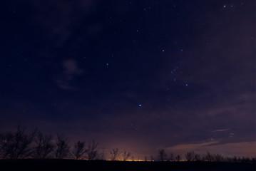 Night sky with stars. Silhouete of trees on night sky