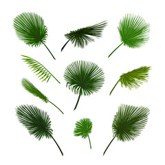 Vector palm leaves set. Exotic palm leaf