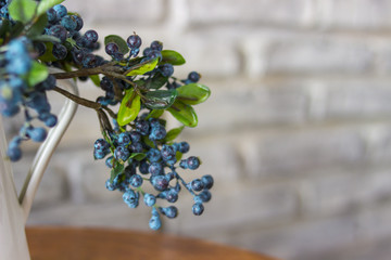 White vases and blueberries. A bush of blueberry, bog whortleberry, great bilberry.