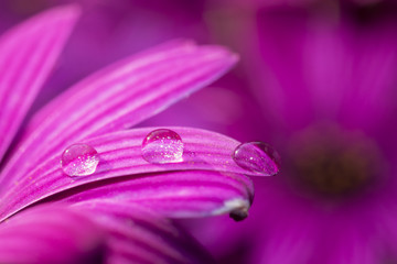 Pink flower in the water drop