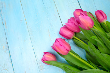 Pink tulips on wooden blue background. Conception holiday, March 8, Mother's Day. Flat lay and copy space