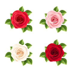 Vector set of red, pink and white roses isolated on a white background.