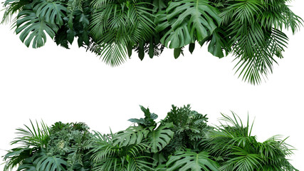 Tropical leaves foliage plant bush floral arrangement nature backdrop isolated on white background, clipping path included. Wall mural