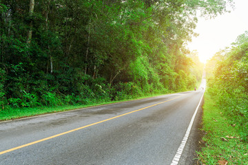 Asphalt road through the green forest to sun