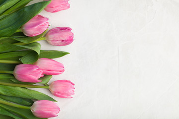 Spring flowers. Pink tulip on white background. Flat lay. Top view with copy space