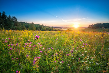 Beautiful sunset over wild flowers in a countryside