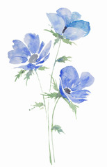 illustration watercolor, drawing bouquet of flowers anemones blue, sketch spots